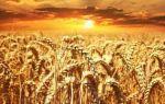 Аренда земельного участка сельхозназначения
