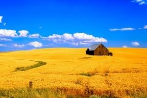 Земли для сельскохозяйственного производства что можно делать
