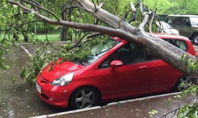 Повреждение автомобиля в результате падения дерева: что делать, как предъявить претензию ЖКХ, ТСЖ
