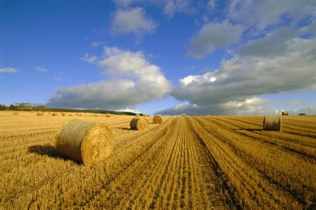 Договор купли-продажи земельного участка, если часть относится к землям, ограниченным в обороте